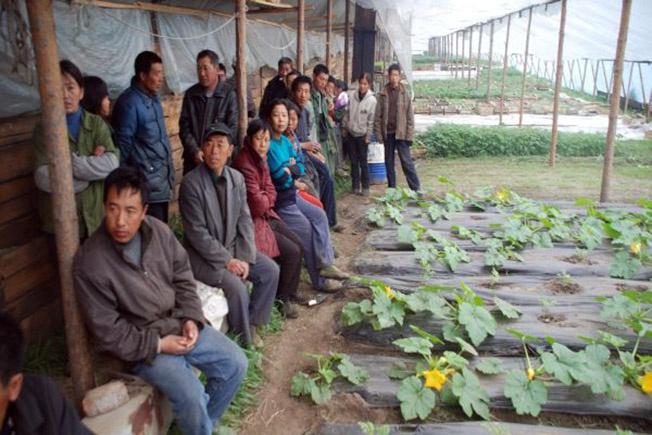 Китайские фермеры осваивают пустующие российские земли.